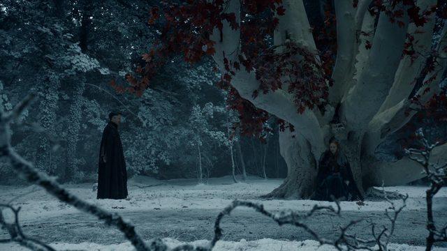 littlefinger sansa tree